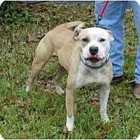 Adopt A Pet :: Bosco - Kingwood, TX