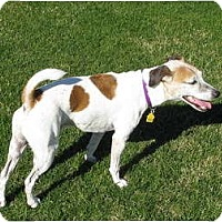 Adopt A Pet :: FERRIS BUELLER - Scottsdale, AZ