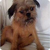 Adopt A Pet :: DENVER in Natchez, MS. - Jackson, MS