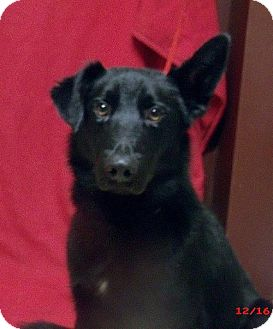 Border Collie Mix Dog for adoption in Gridley, California - Mika