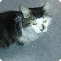 Adopt A Pet :: Donovan - Delmont, PA