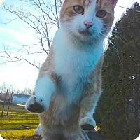 Adopt A Pet :: Jasper - Oberlin, OH