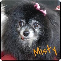 Adopt A Pet :: Misty - Orange, CA