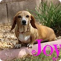 Adopt A Pet :: Joy - Scottsdale, AZ