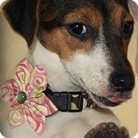 Adopt A Pet :: Rorie - Omaha, NE