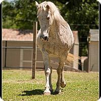 Adopt A Pet :: Dixie - Cantonment, FL