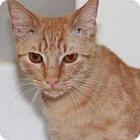 Adopt A Pet :: Ginger - Greensboro, NC