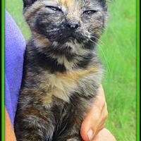 Adopt A Pet :: Victoria - Culpeper, VA