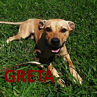 Adopt A Pet :: Greta - Mountain View, AR