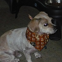 Adopt A Pet :: Walter - Wisconsin Dells, WI