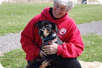 Boxer Mix Dog for adoption in Elyria, Ohio - Fig
