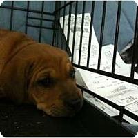 Adopt A Pet :: Mixed Breed Pups! - Toronto/Etobicoke/GTA, ON