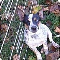Adopt A Pet :: Laruren - selden, NY