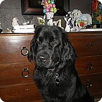 Adopt A Pet :: Lucy - Silverthorne, CO