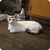 Adopt A Pet :: Debrie - Brooklyn, NY