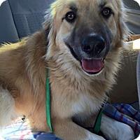 Adopt A Pet :: Balor - Minneapolis, MN