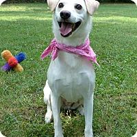 Adopt A Pet :: Shelby - Mocksville, NC