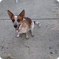 Adopt A Pet :: Dolores - Simi Valley, CA