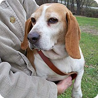 Adopt A Pet :: Lulabell - Huntingburg, IN