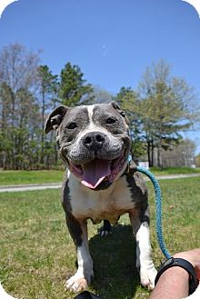 Bulldog Mix Dog for adoption in Brookhaven, New York - Miss Piggy