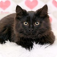 Adopt A Pet :: Janja - Sterling Heights, MI