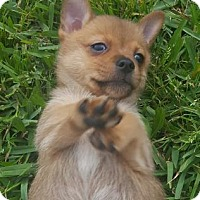 Adopt A Pet :: Moe - Santa Fe, TX