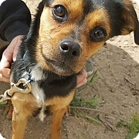 Adopt A Pet :: Leo - Palmdale, CA