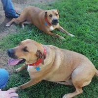 Adopt A Pet :: Lucy - LaGrange, GA