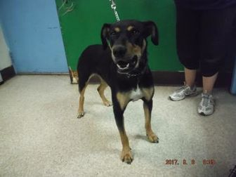Rottweiler Mix Dog for adoption in Pasco, Washington - Miley