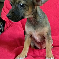 Adopt A Pet :: Jacky - West Springfield, MA