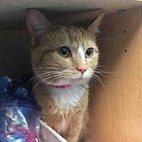 Adopt A Pet :: ALMOND - Canfield, OH