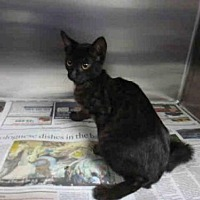Adopt A Pet :: CACHO - Los Angeles, CA