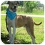 Photo 3 - Boxer/Terrier (Unknown Type, Medium) Mix Dog for adoption in Portsmouth, Rhode Island - Kirby