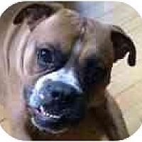 Adopt A Pet :: Morris Bertram - North Haven, CT