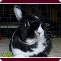 Adopt A Pet :: Pockets - Williston, FL