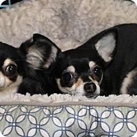 Adopt A Pet :: Jesse - Kempner, TX
