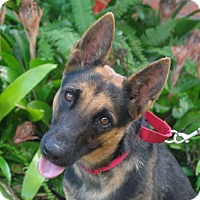 Adopt A Pet :: Lucy - Riverview, FL