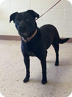 Labrador Retriever Mix Dog for adoption in McDonough, Georgia - Jellybean