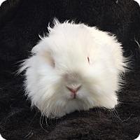 Adopt A Pet :: Miss Moppet - Watauga, TX