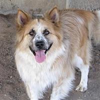 Adopt A Pet :: Doug - Chinook, MT