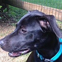 Adopt A Pet :: Zoe - Marlton, NJ