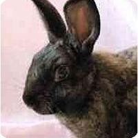 Adopt A Pet :: Dude - Huntsville, AL