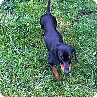 Adopt A Pet :: Al - MD - Jacobus, PA