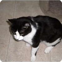 Adopt A Pet :: Tango - Cleveland, OH