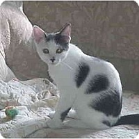 Adopt A Pet :: Angie - Chesapeake, VA