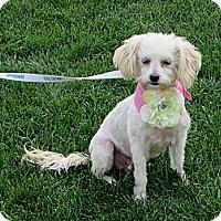Adopt A Pet :: **LAUREL** - Stockton, CA