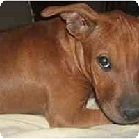 Adopt A Pet :: Minnie - Mesa, AZ