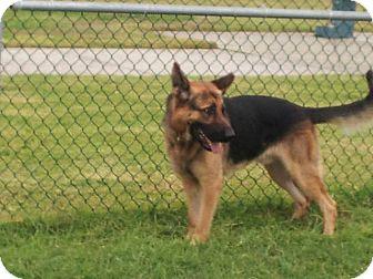 German Shepherd Dog Dog for adoption in Cranston, Rhode Island - Hunter