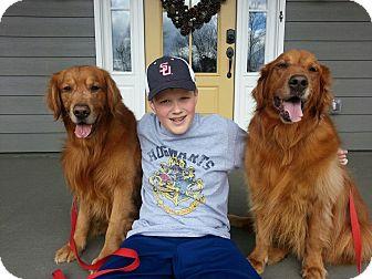 Golden Retriever Dog for adoption in BIRMINGHAM, Alabama - Sam