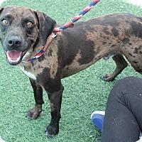 Adopt A Pet :: FRISKO-JJ (LOCATED CALIF) - Roundup, MT